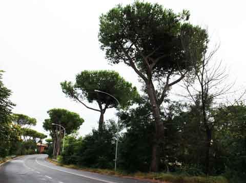Cassia Nuova