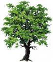 quercia1.jpg