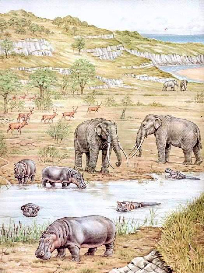Ipotesi di ambiente del pleistocene medio superiore a Riano con Hippopotamus amphibius
