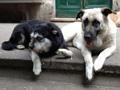 Cloe e Zampetta