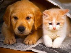 cani-gatti