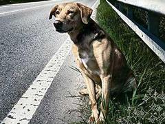 cane-strada.jpg