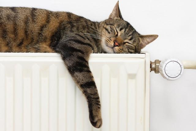 Siamo Sempre Preoccupati Per I Consumi Del Riscaldamento Centralizzato Che  Dipendono Da Diverse Variabili Quali Il Costo Del Gas, Lu0027andamento  Climatico E ...