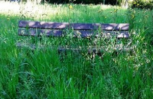 panchina erba alta