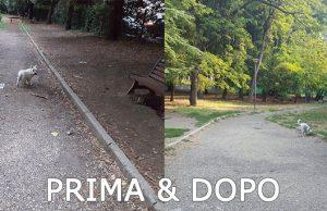 Area Cani Via dell'Alpnimso | Prima e dopo