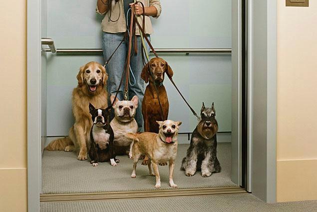 Cani in ascensore