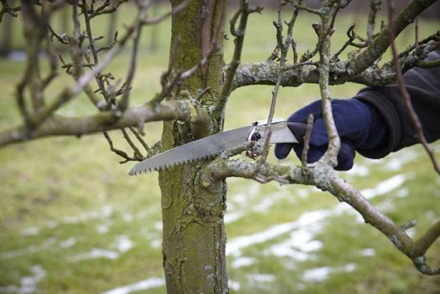 albero-secco