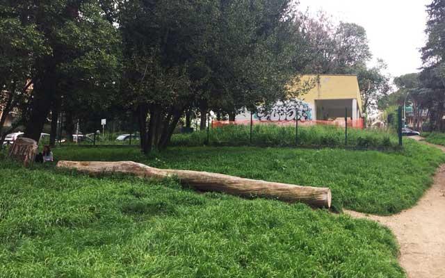 alberi via del podismo