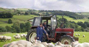 pecore-trattori