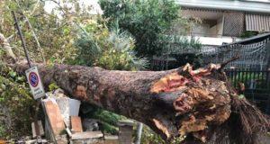 albero-crollato