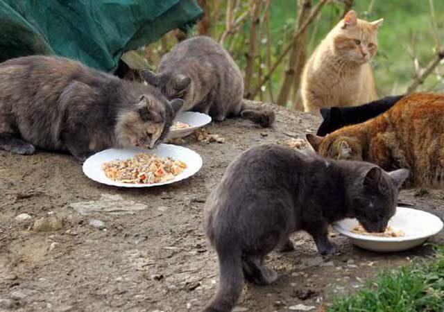 gatti via rocaporena