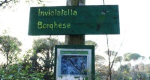 inviolatella borghese