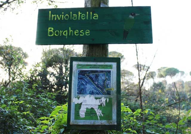 inviolatella borghese