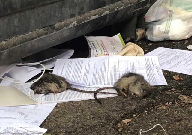 topi-morti