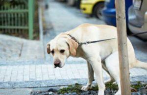 deiezioni-canine