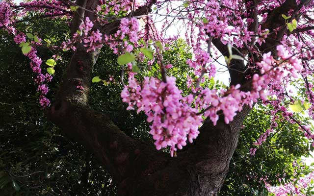 alberodigiuda-fleming
