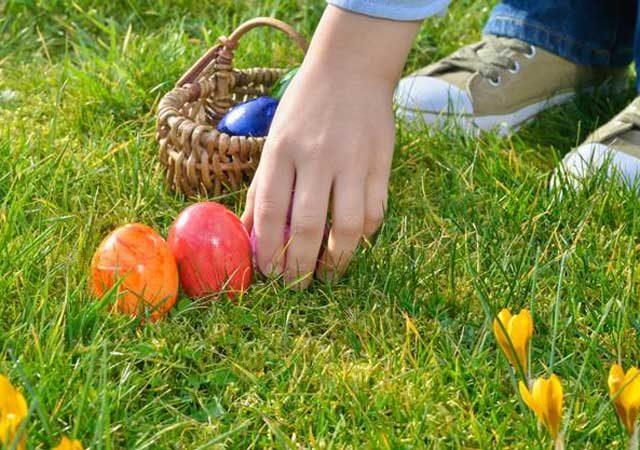 caccia-uovo