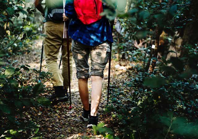 escursione-in-un-bosco