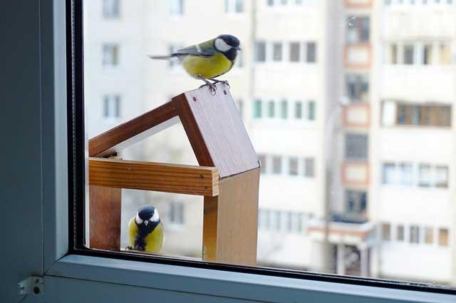 birdwatching-da-casa