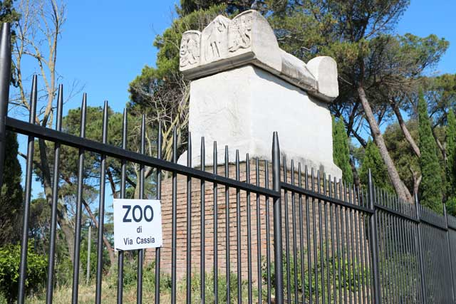 zoo-cassia