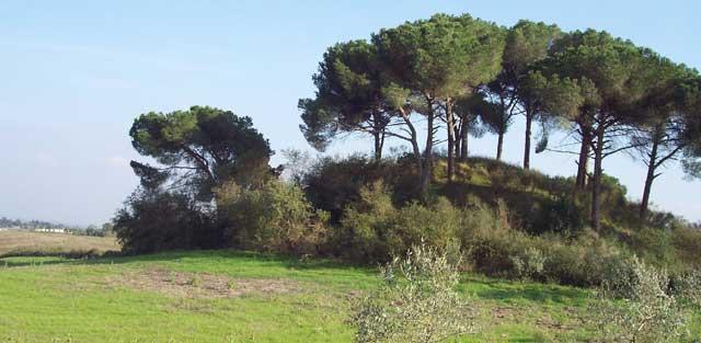 tumuli VEIO-Tumulo-Vaccareccia-Foto-di-Alessandra-Reggi